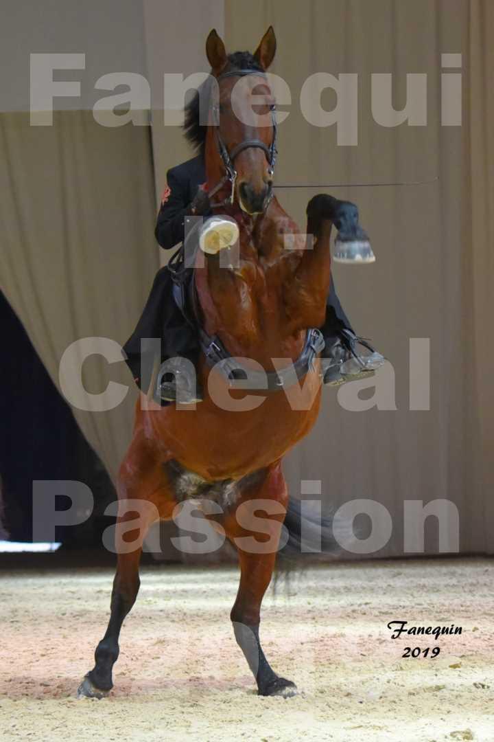 Cheval Passion 2019 - LUSITANIENS - Colette MARIEAUD