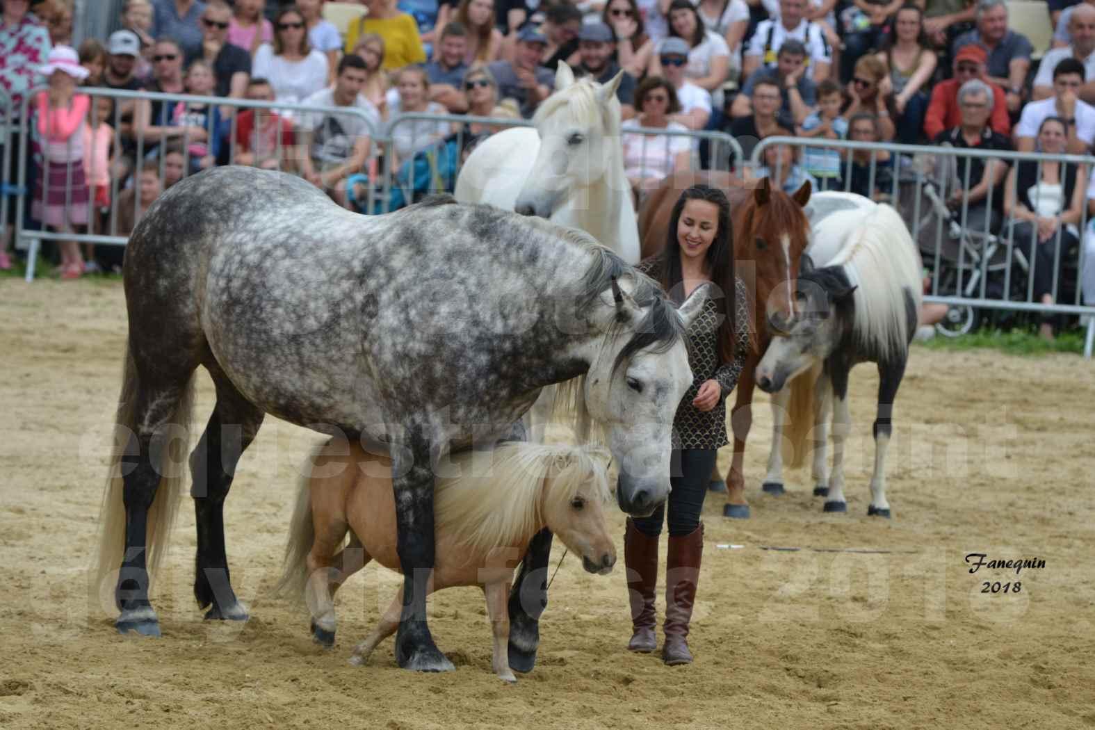 Spectacle Équestre le 3 juin 2018 à Saint Gély du Fesc - 5 chevaux en liberté - Anne Gaëlle BERTHO - 11