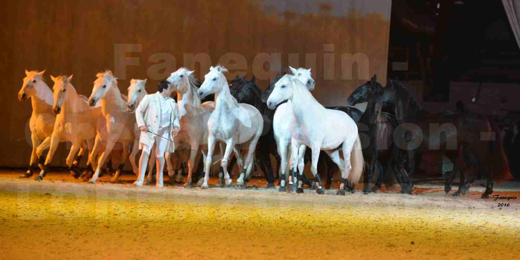 """Cheval Passion 2016 - Spectacle les Crinières d'OR - LORENZO """"Blanc"""" - représentation du 23 janvier 2016 - 44"""