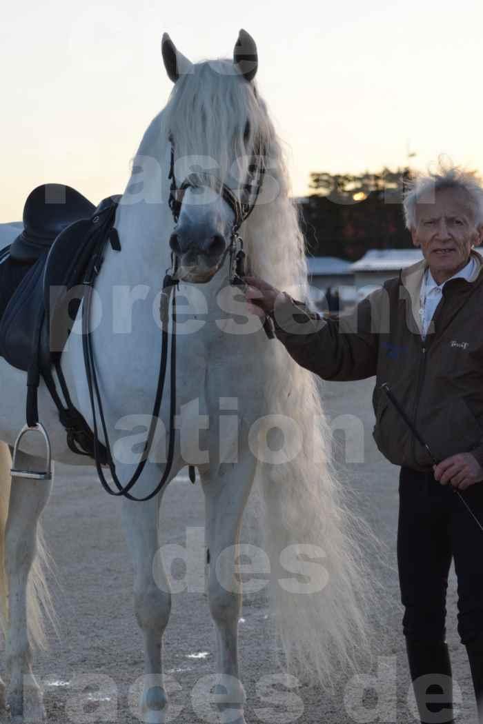 """Cheval Passion 2014 - Etalon """"GALAN""""  blanc écurie Alain LAUZIER - Notre Sélection - Portraits - 02"""