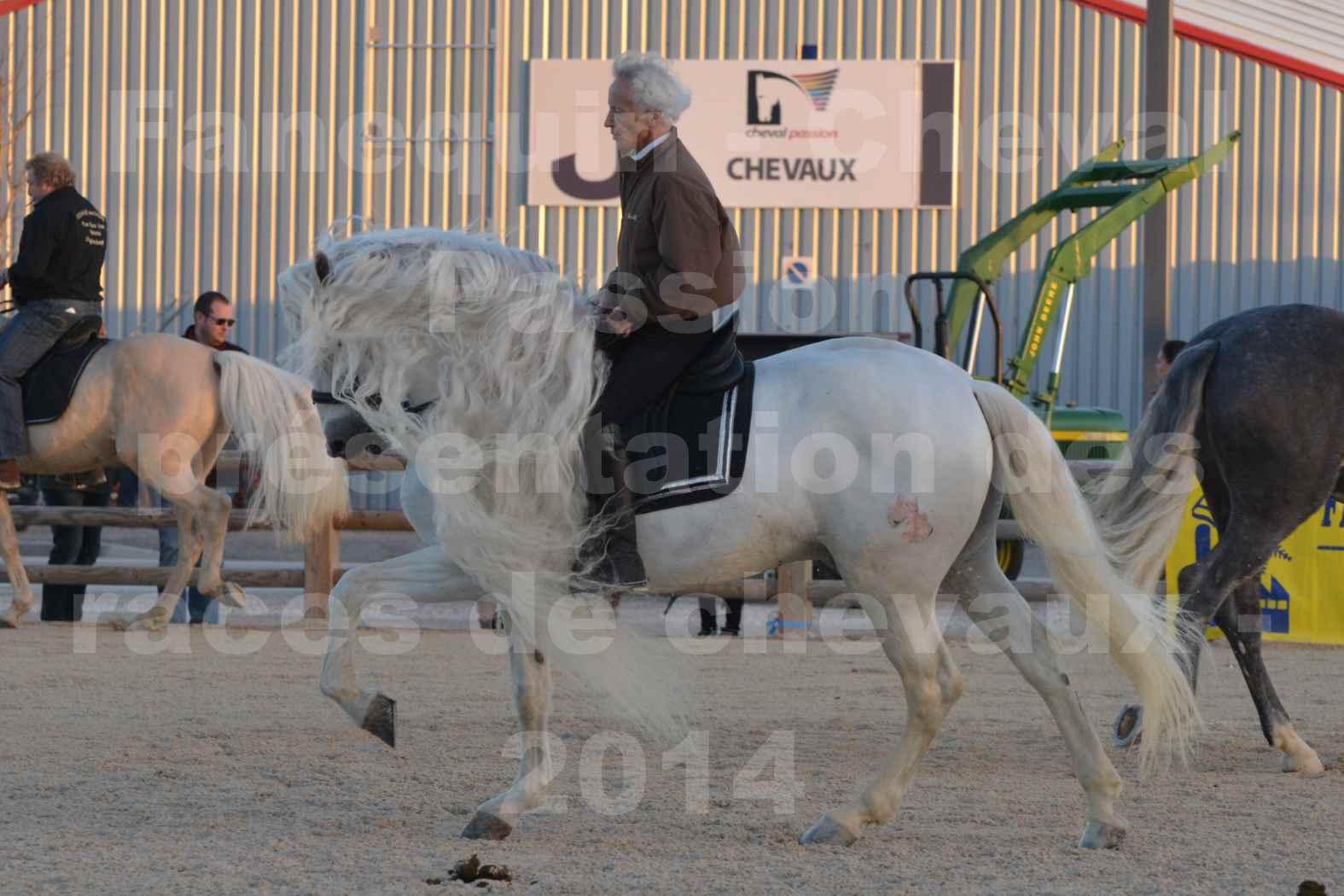 """Cheval Passion 2014 - Etalon """"GALAN""""  blanc écurie Alain LAUZIER - Notre Sélection - 19"""