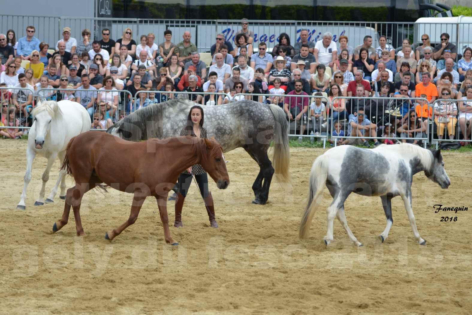 Spectacle Équestre le 3 juin 2018 à Saint Gély du Fesc - 5 chevaux en liberté - Anne Gaëlle BERTHO - 05