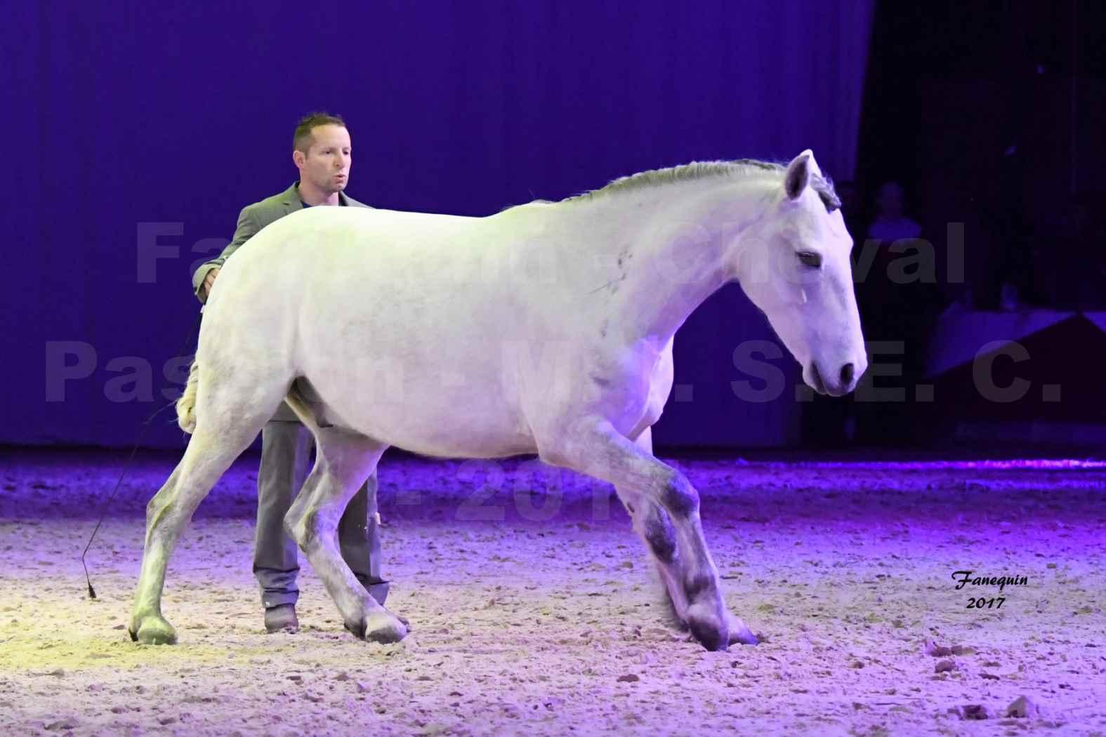 Cheval Passion 2017 - M. I. S. E. C. - Ludovic LONGO & 1 cheval en liberté - 04