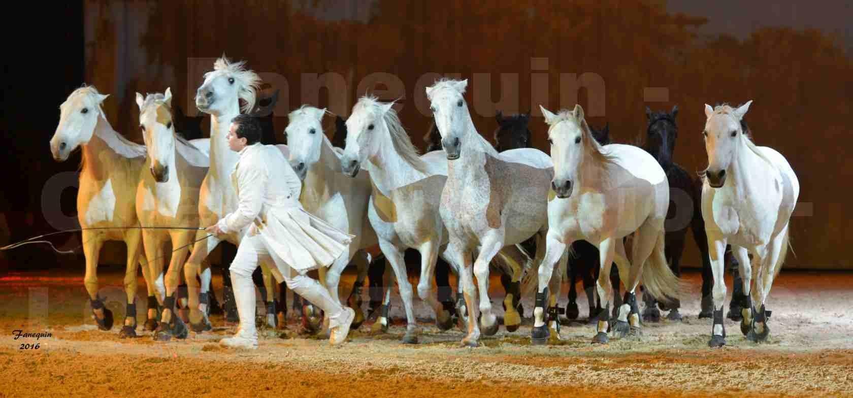 """Cheval Passion 2016 - Spectacle les Crinières d'OR - LORENZO """"Blanc"""" - représentation du 20 janvier 2016 - 45"""