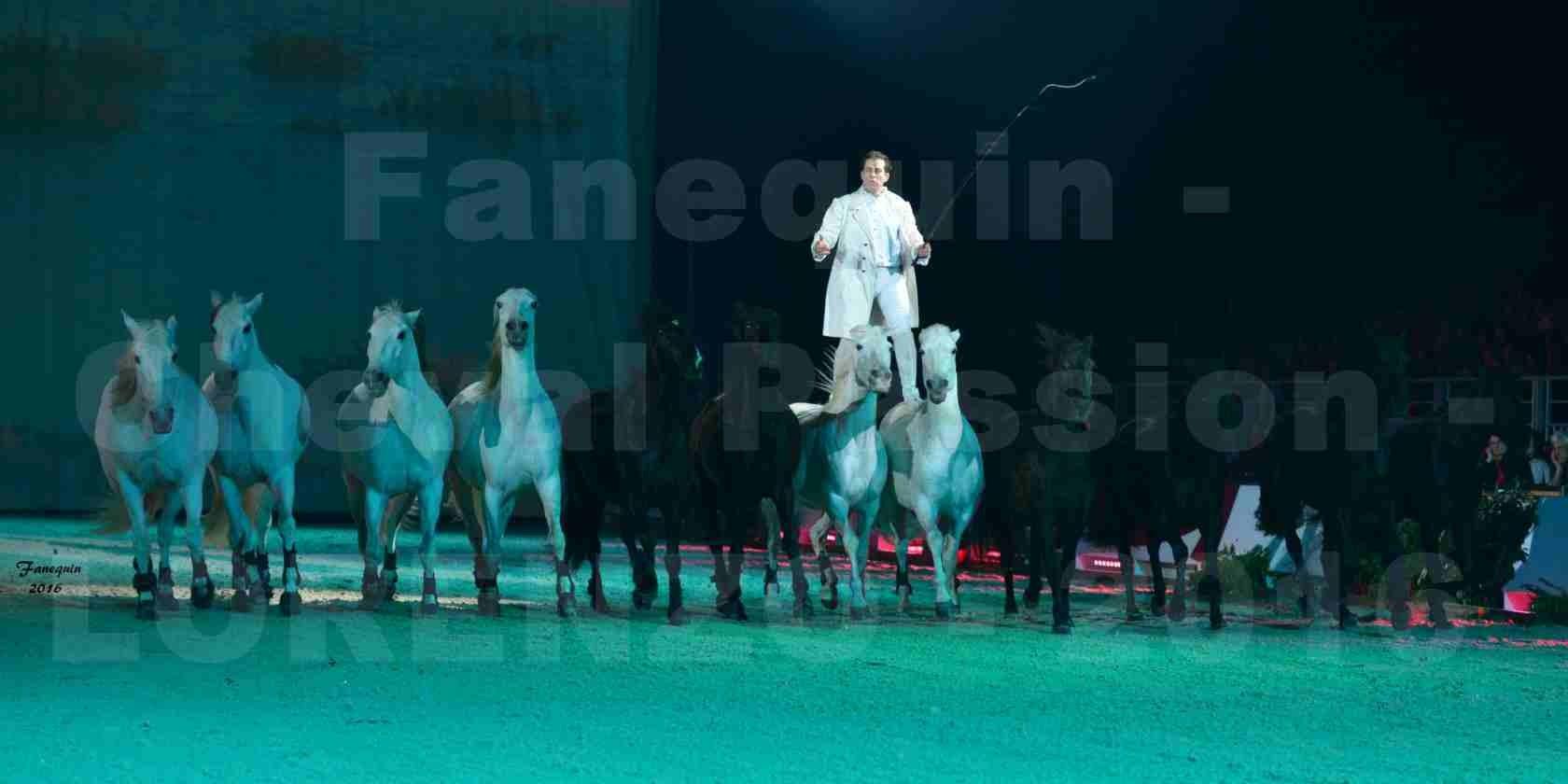 """Cheval Passion 2016 - Spectacle les Crinières d'OR - LORENZO """"Blanc"""" - représentation du 20 janvier 2016 - 07"""