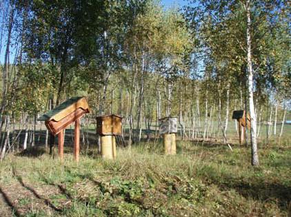 依阿納絲塔夏的建議,以仿效自然的方法為蜜蜂打造的家
