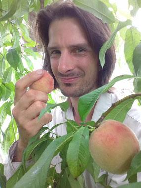 溫室內的桃子