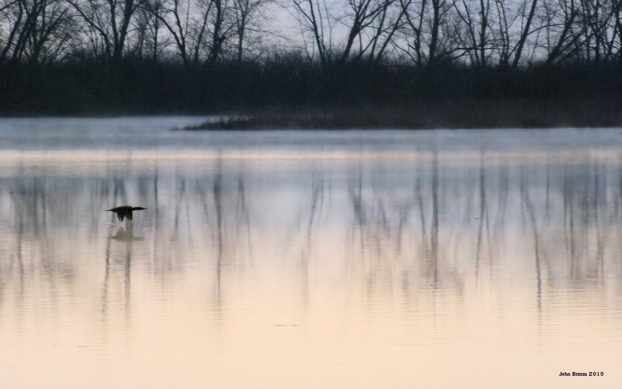 Foggy Morning Flight