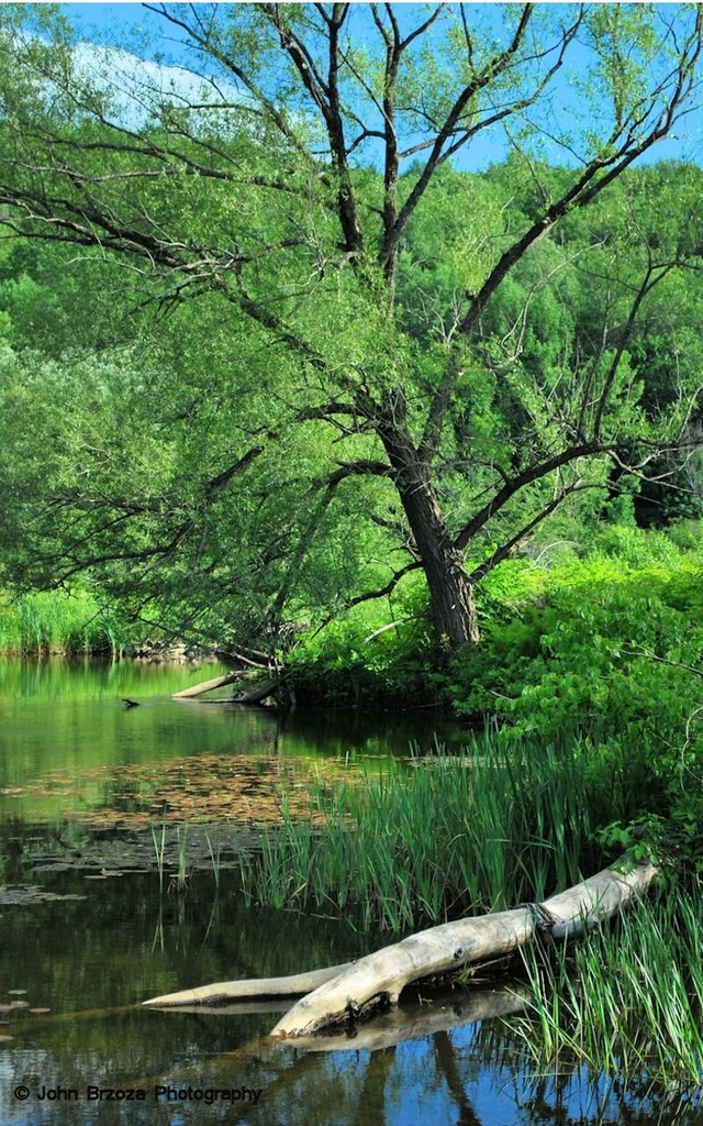 Willams River