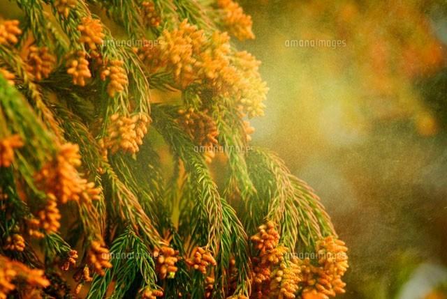 春の大敵 花粉