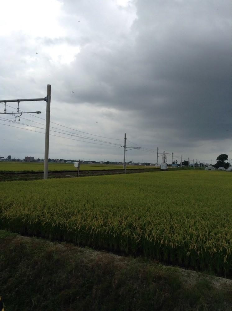 水田に多くのトンボ
