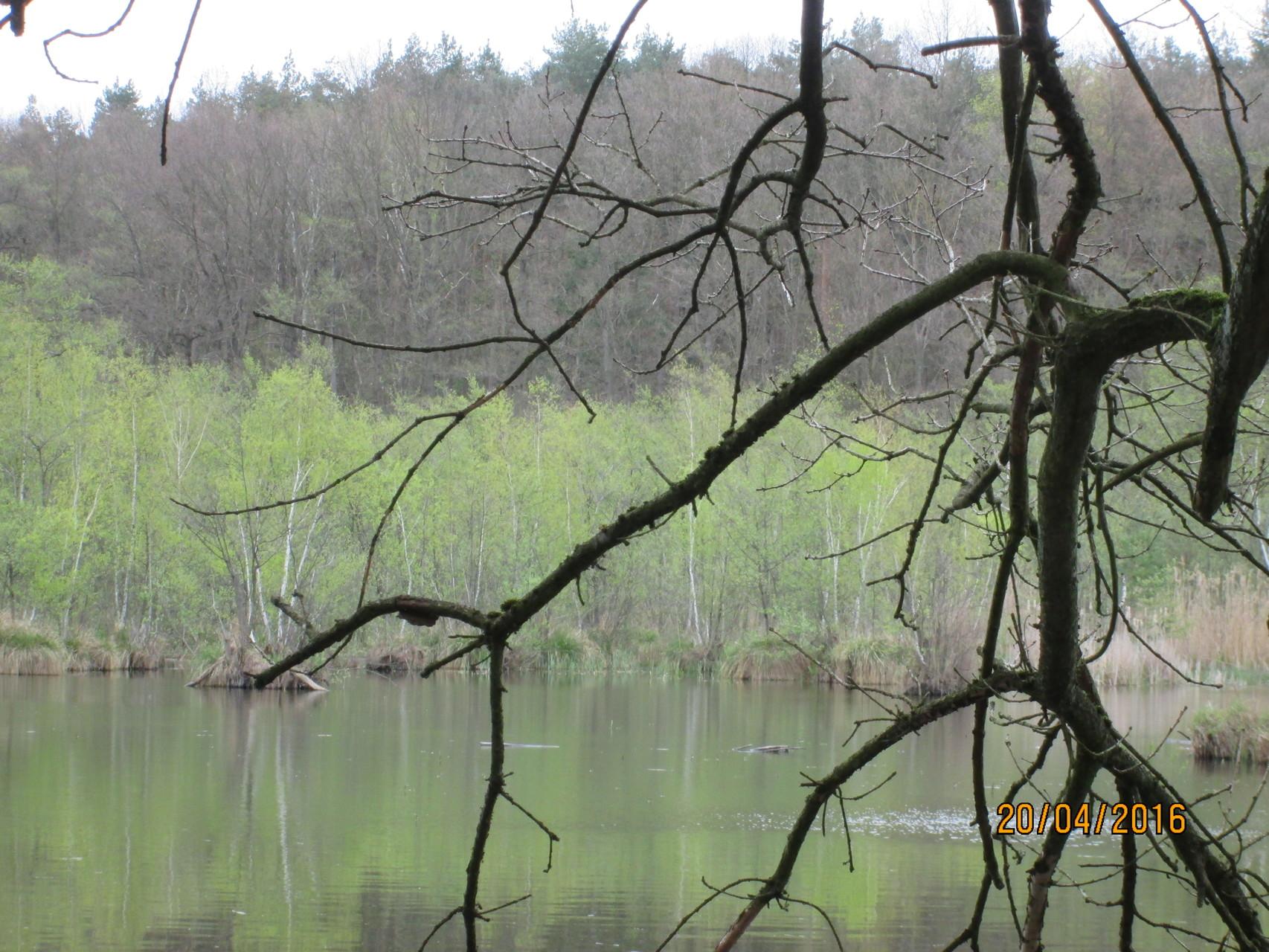 wenn sogar das Schilf wieder aus trockenen Stümpfen sprießt und die Birken ausschlagen...