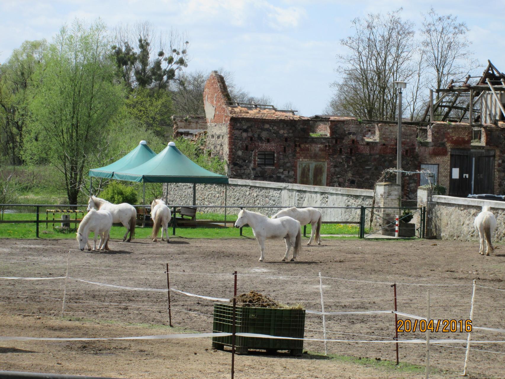 ist so manches weiße Pferd aus dem Traum in die Wirklichkeit galoppiert...