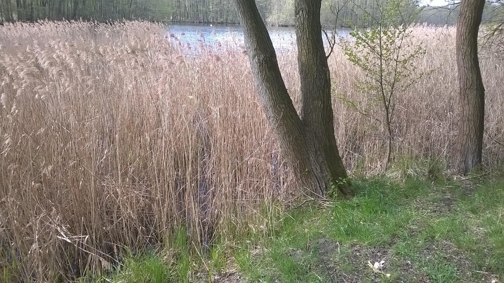 das Gartengelände neu gestaltet.  Kleine Kunden schauen auf kleine Seen...