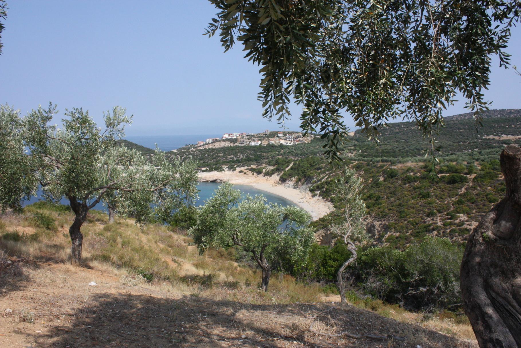 Champ d'olivers avec vue sur mer