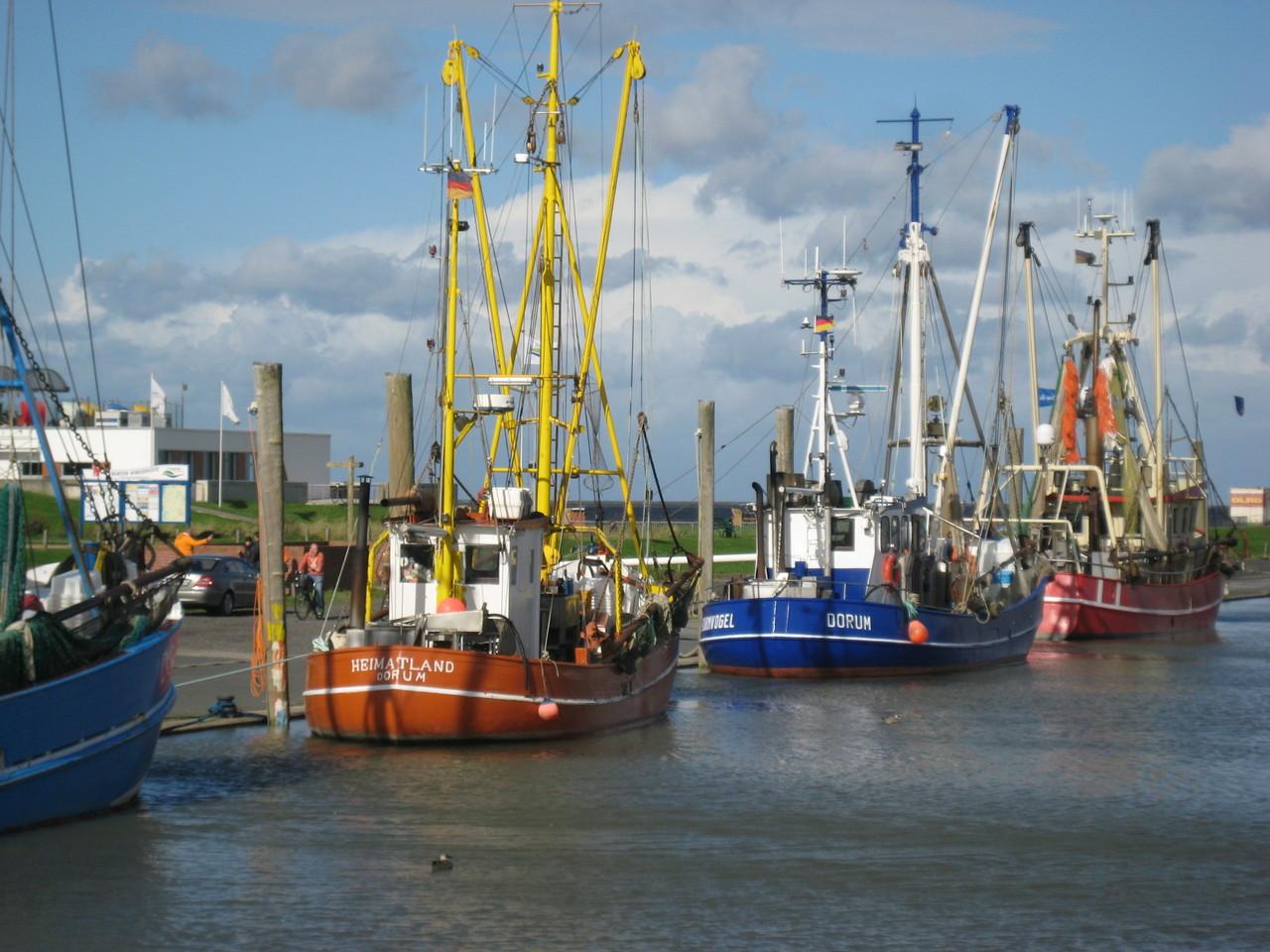 Kutterhafen - etwa eine Stunde vor Hochwasser gibt es frische Krabben direkt vom Schiff.