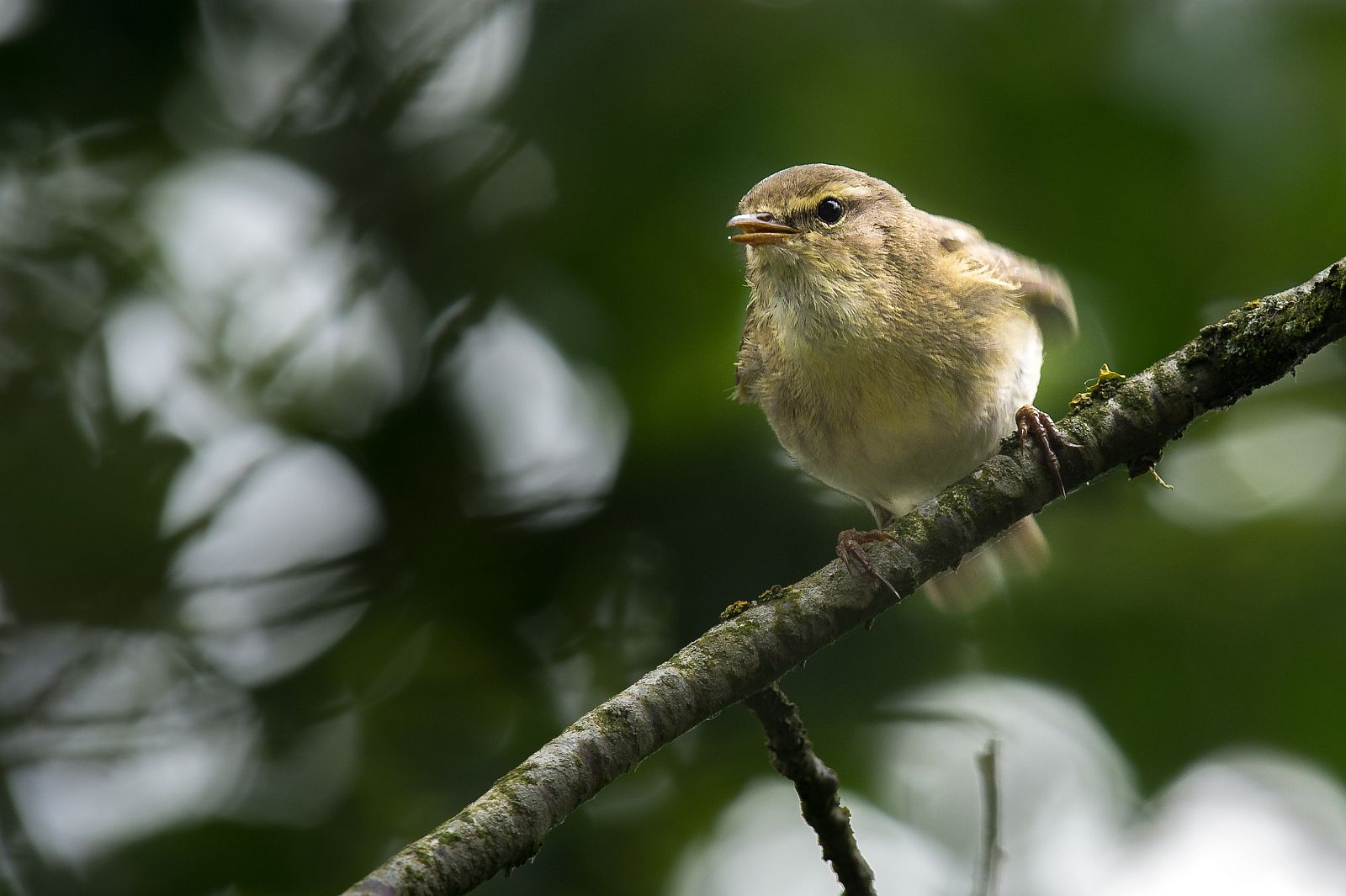März 2017: Kleiner Vogel, Paul Neukam