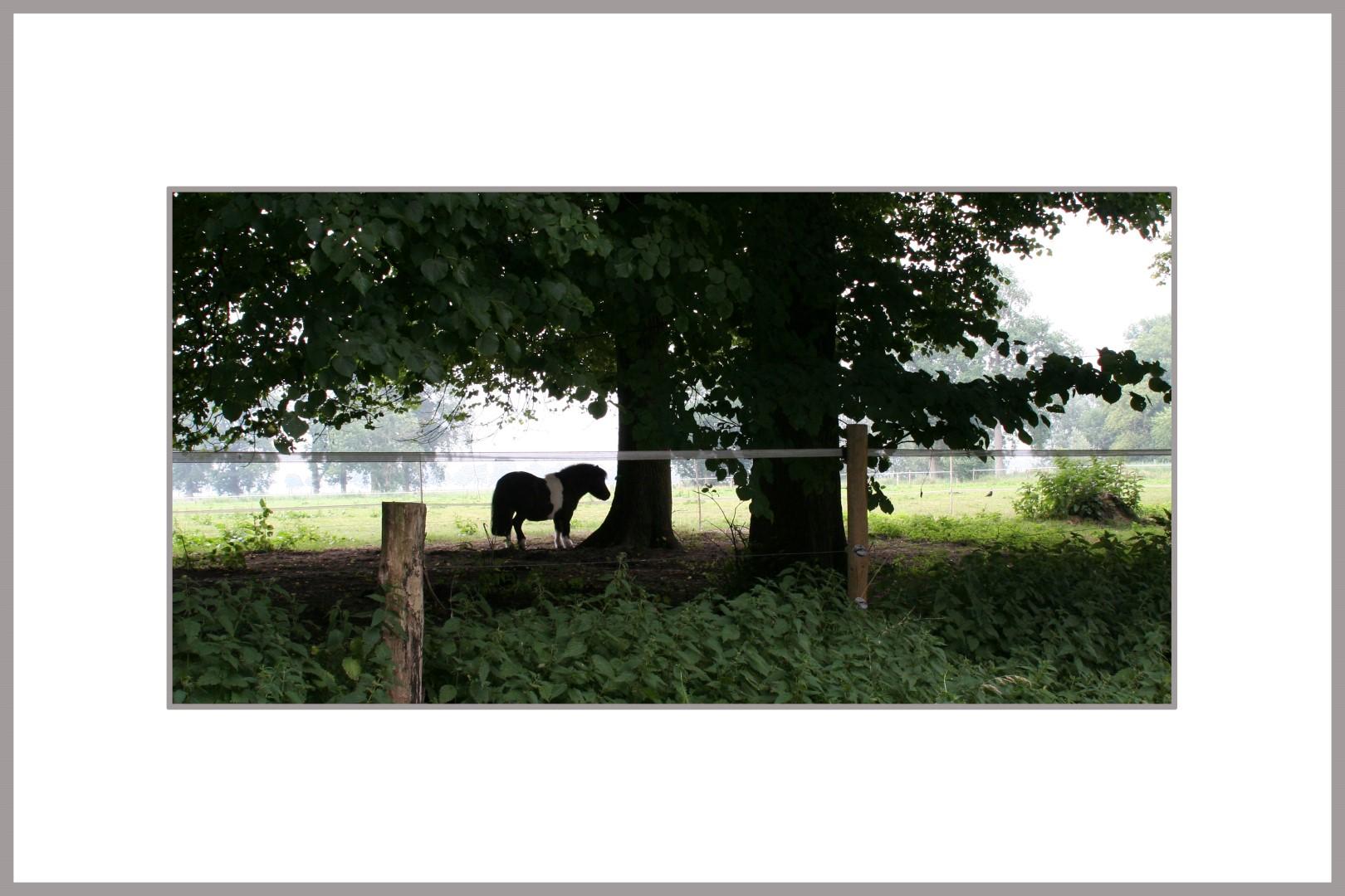 Foto in passepartout en lijst, afm. 30x40 cm - Elsa Snijder