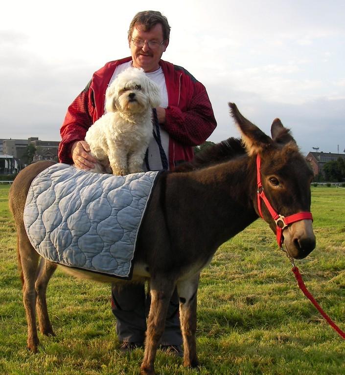 (D) Neuss, Happy Dogs 2008, Merlin auf Eselstute Masl-tow und TierTV Moderator Klaus-Peter Kirchhoff