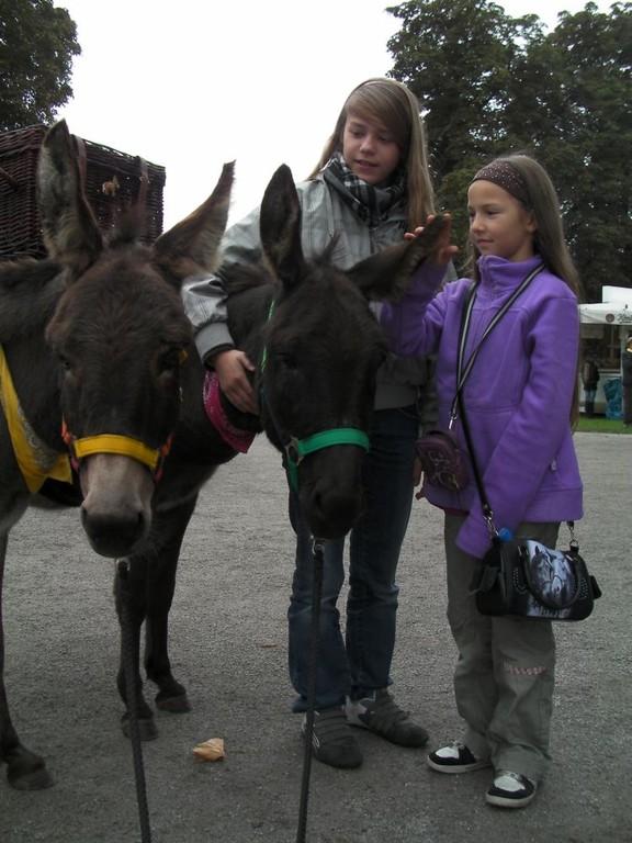 Kinder lieben die Esel.