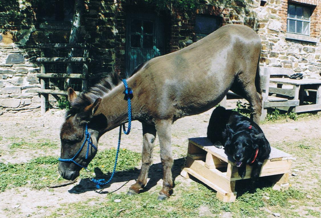 Training mit Hund und Esel