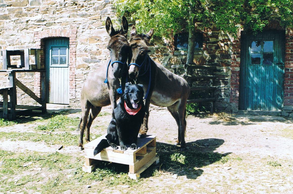 Training mit Hund und Eseln