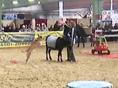 (D) Messe, Pferd Rhein-Ruhr, Februar/März 2008