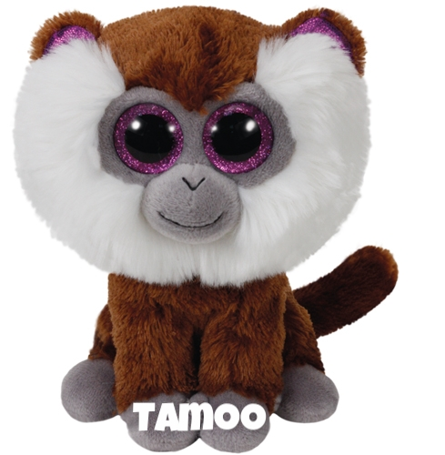 "Tamoo is op 16 mei jarig ""My Birthday is May 16 Monkey see, monkey do / You're special to me and I love you !"""