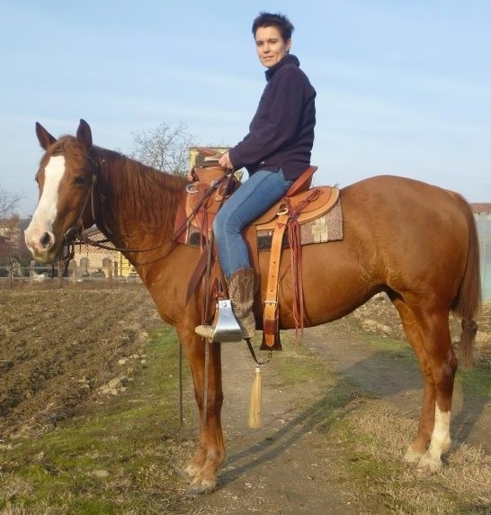 Fattrici selleria la colombaia articoli equitazione on line for Selleria colombaia