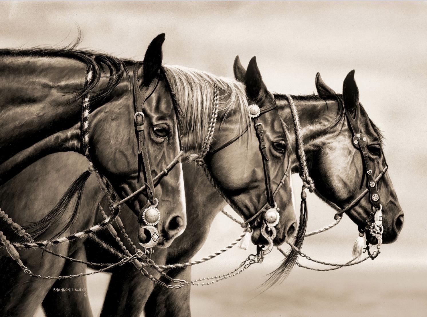 Morsi western selleria la colombaia articoli equitazione for Selleria colombaia
