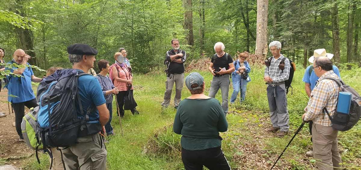 L'association ACCOB explique le protocole Vieille forêt- les malencontreuses coupes durant le Covid...