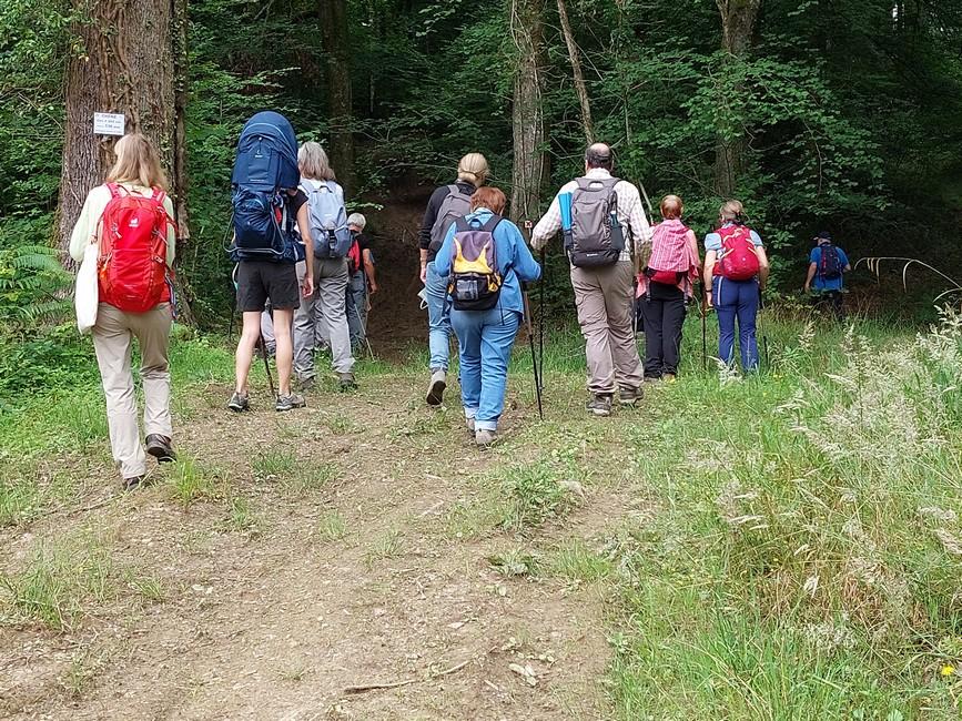 Partis sous la canopée des arbres centenaires de la forêt du Bager d'Oloron- ACCOB