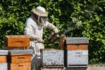 Les ruches des cîmes partenaire de l'ACCOB