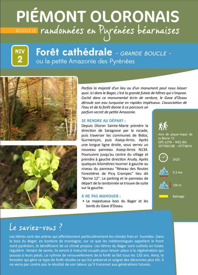"""Descriptif de la Forêt Cathédrale ou Petite Amazonie des Pyrénées sur le PLR nommé """"Grande Boucle"""" au Bager d'Oloron"""