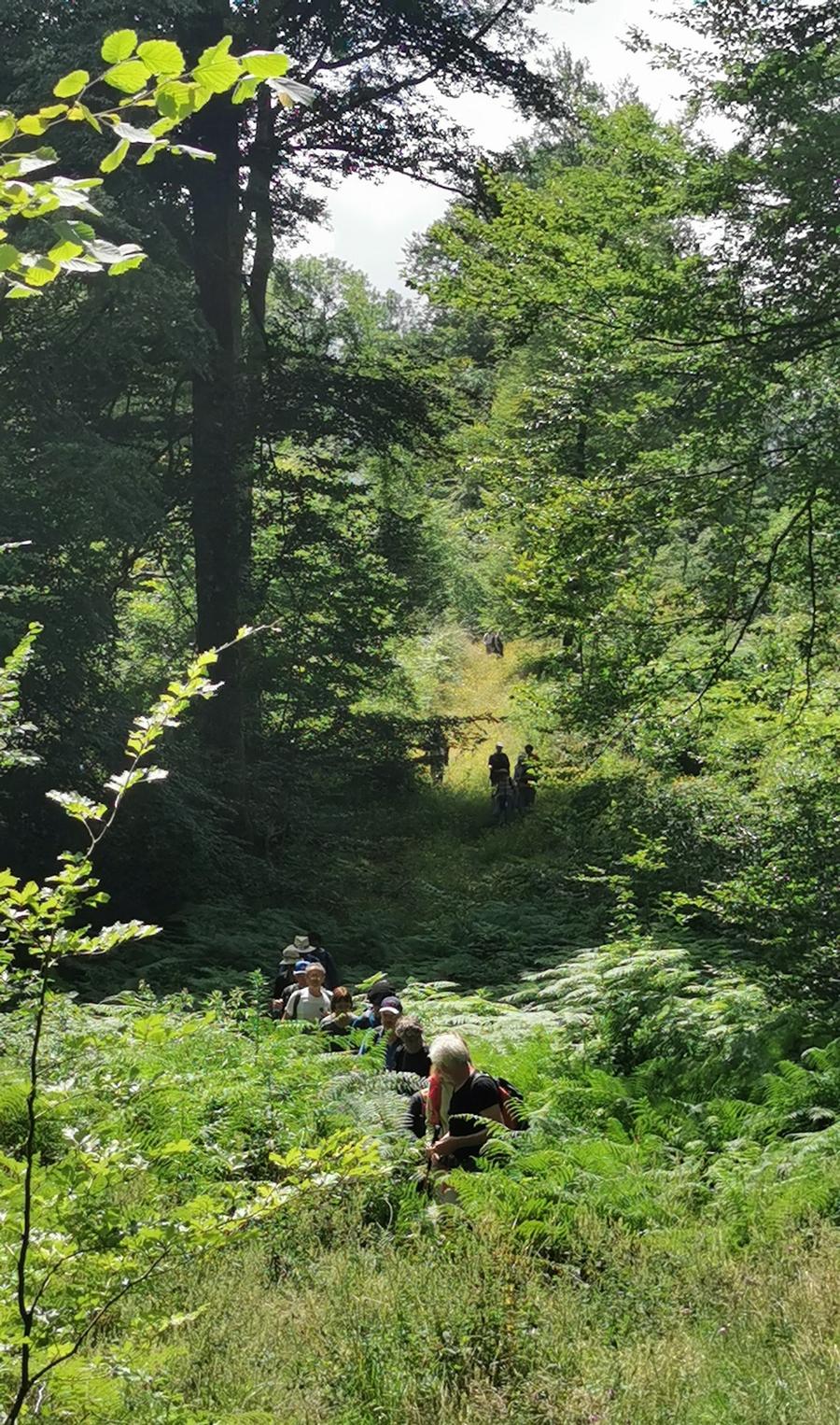 A s'y tromper : Une Petite Amazonie en forêt du Bager d'Oloron-64400