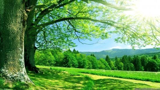 Défendons du massacre la forêt d'Oloron Sainte Marie