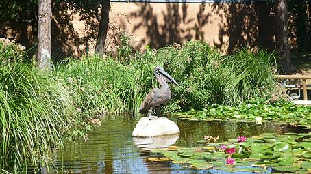 Photo Pelikan Brunnen beim Gartenschach im Pelikan Park