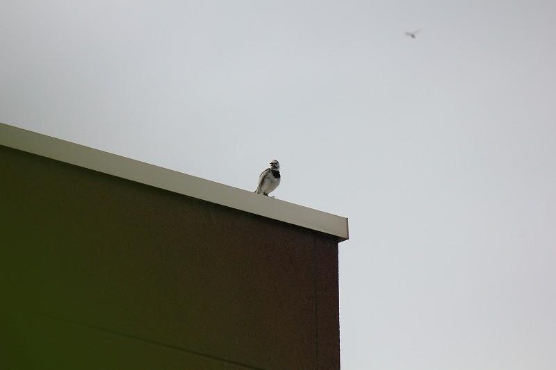 天敵から守る親鳥