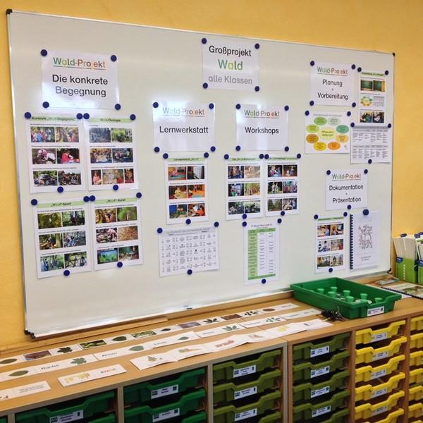 Projektschritte von der Planung über Vorbereitung, Workshops, konkreten Waldbegegnungen bis zur Dokumentation (unten: unzählige Schubladen mit Anschauungsobjekten)