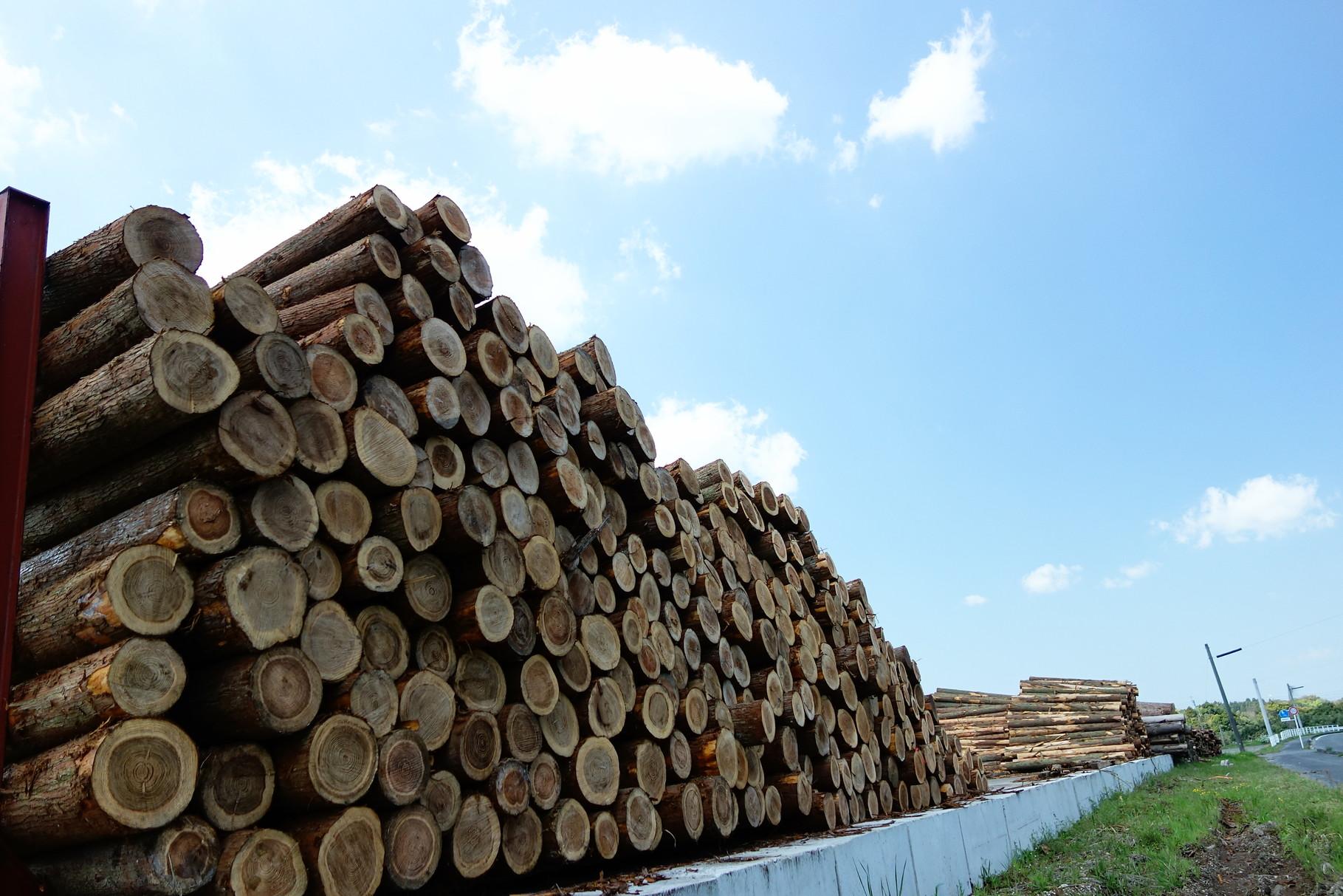 県道沿いの原木土場 来社された事が有る方にはおなじみの風景です