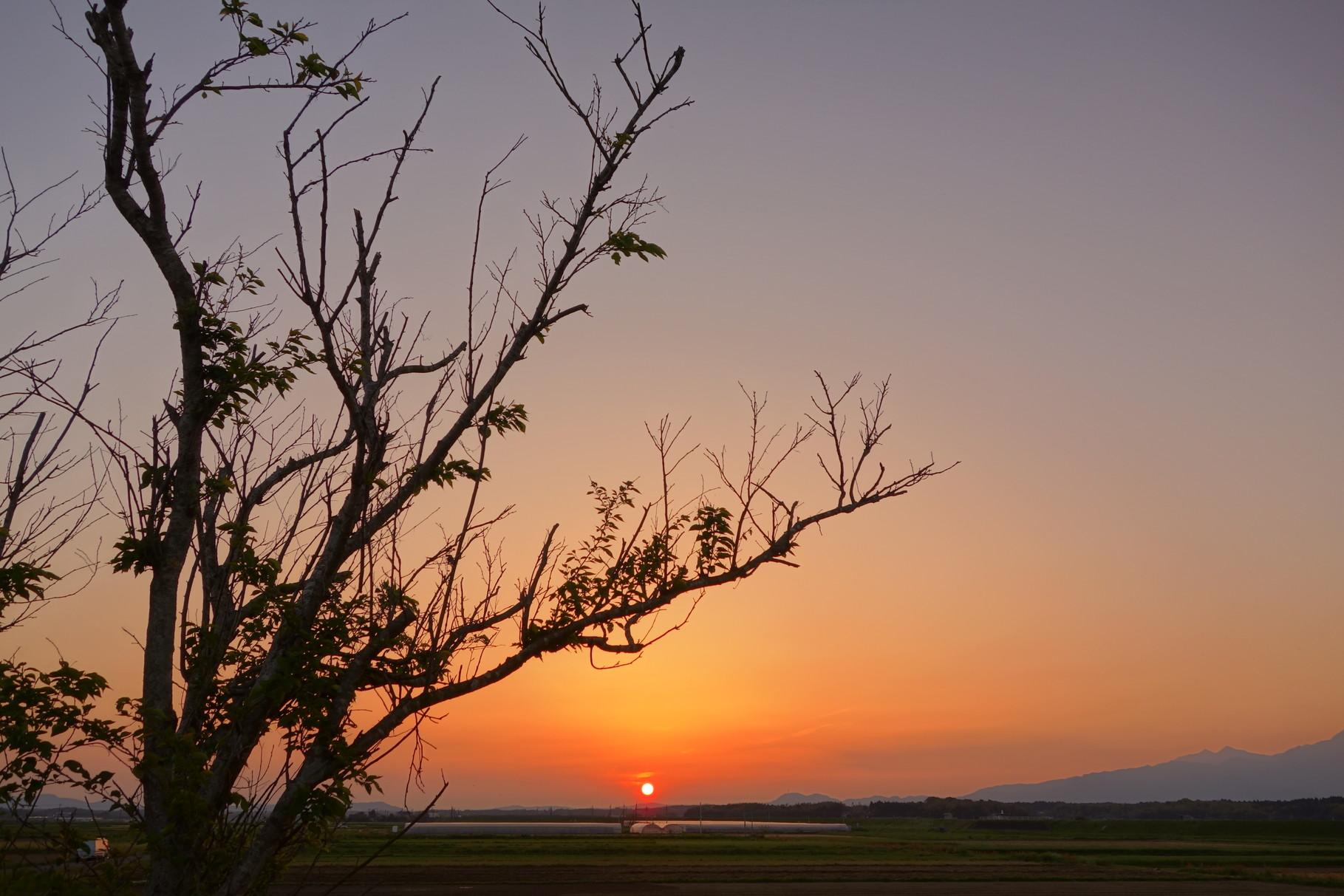 夕焼けに旧線路沿いの桜の木を添えてみました