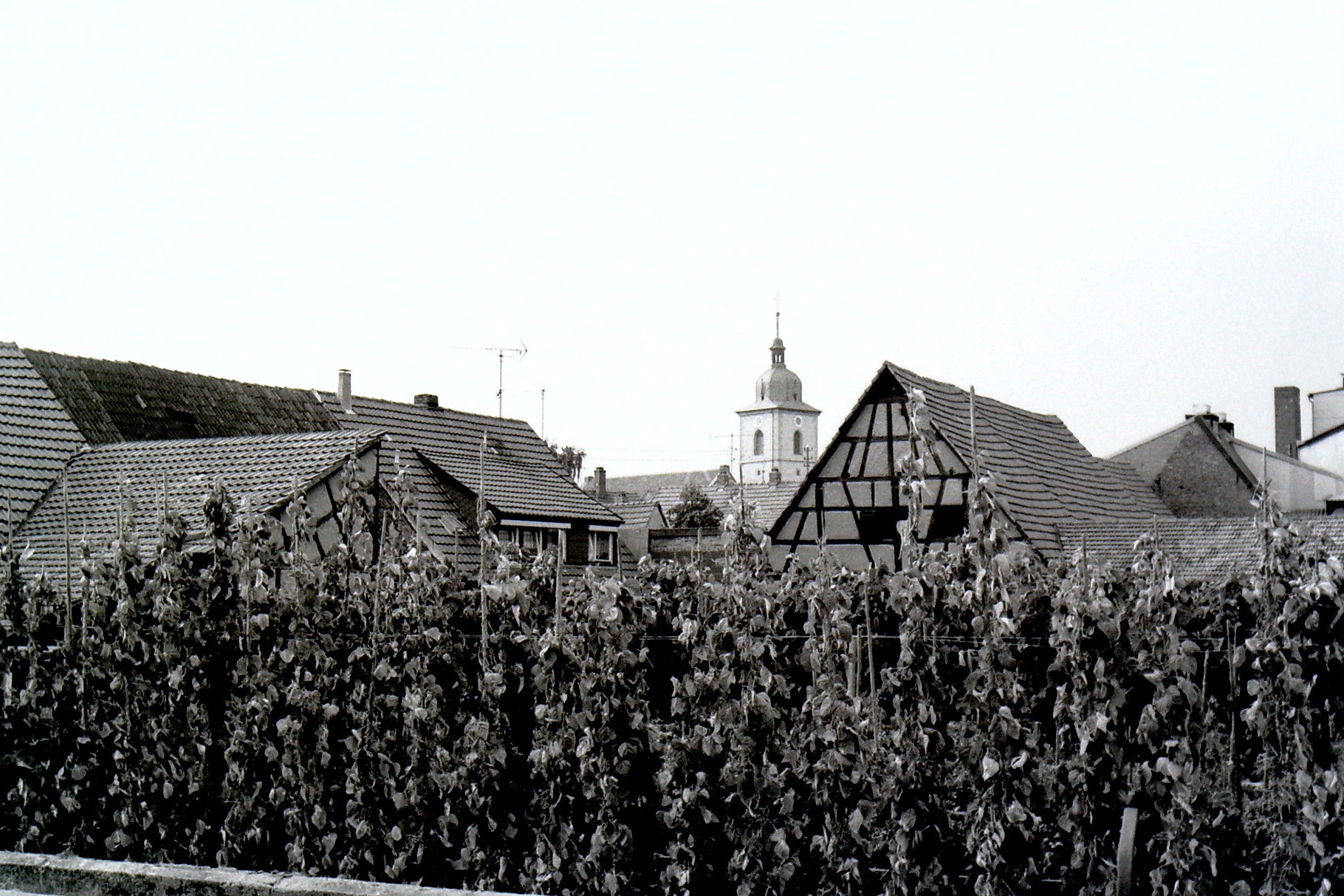 Blick auf Gochsheim vom Bauerngraben