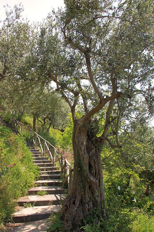 zejscie schodami wsrod pieknych gajow