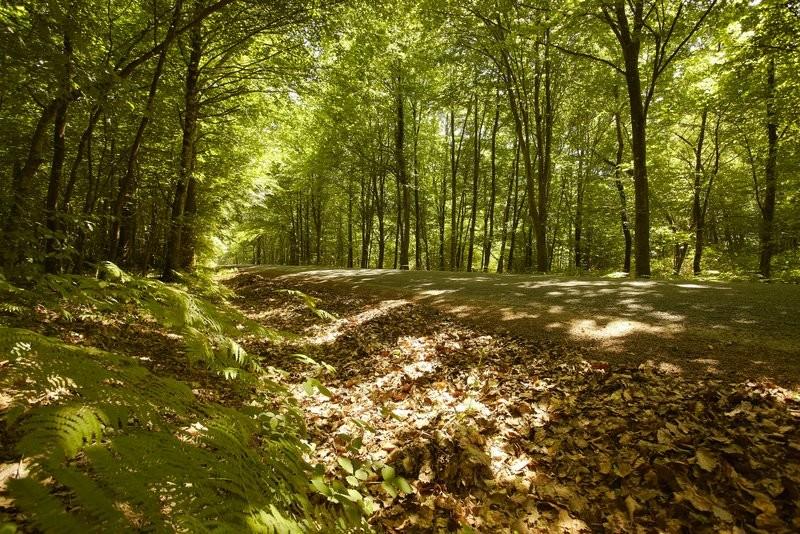 Massif forestier de Mervent