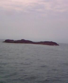平島(ヒラマサ、真鯛、アコウ)