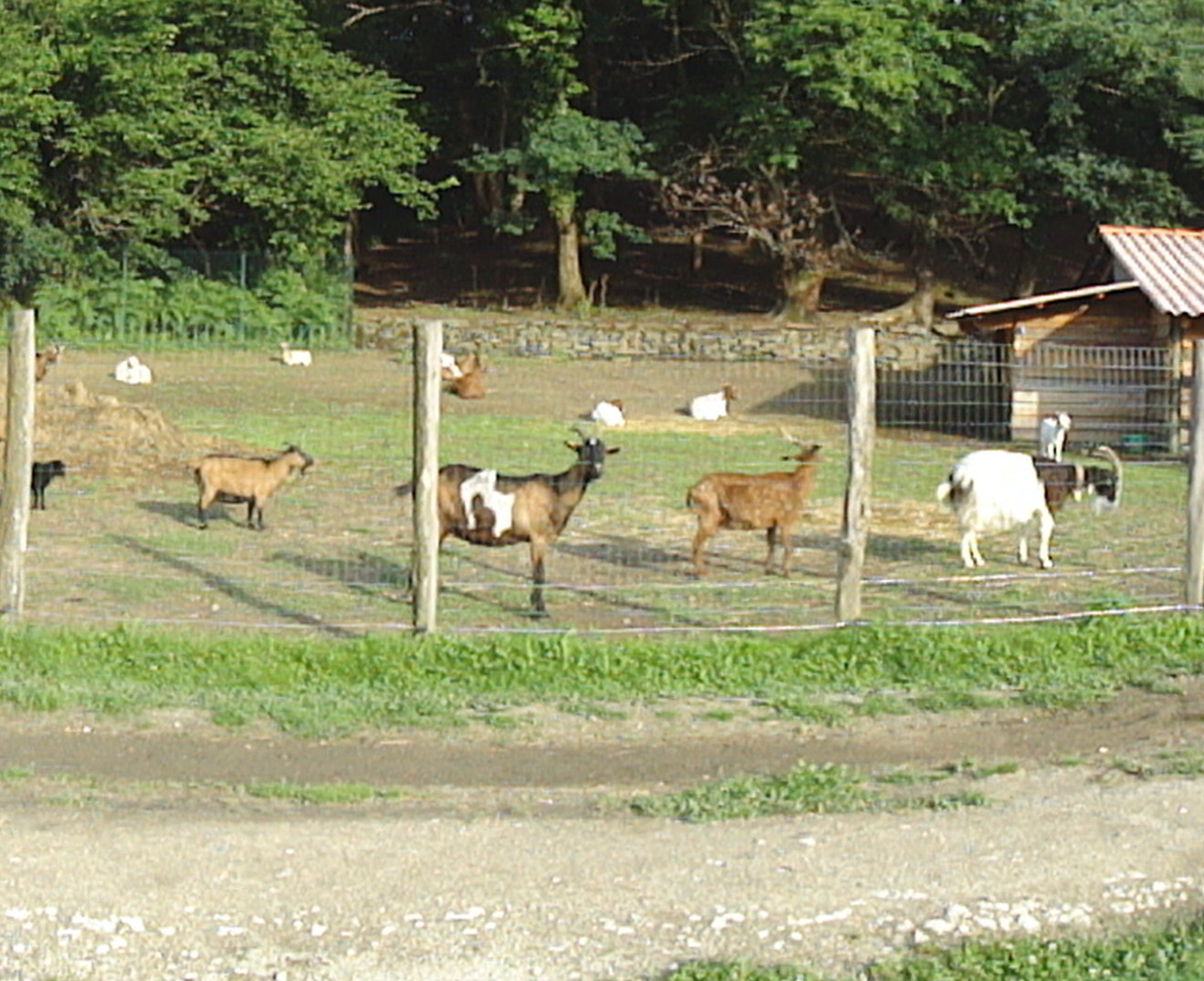Pedagogical farm