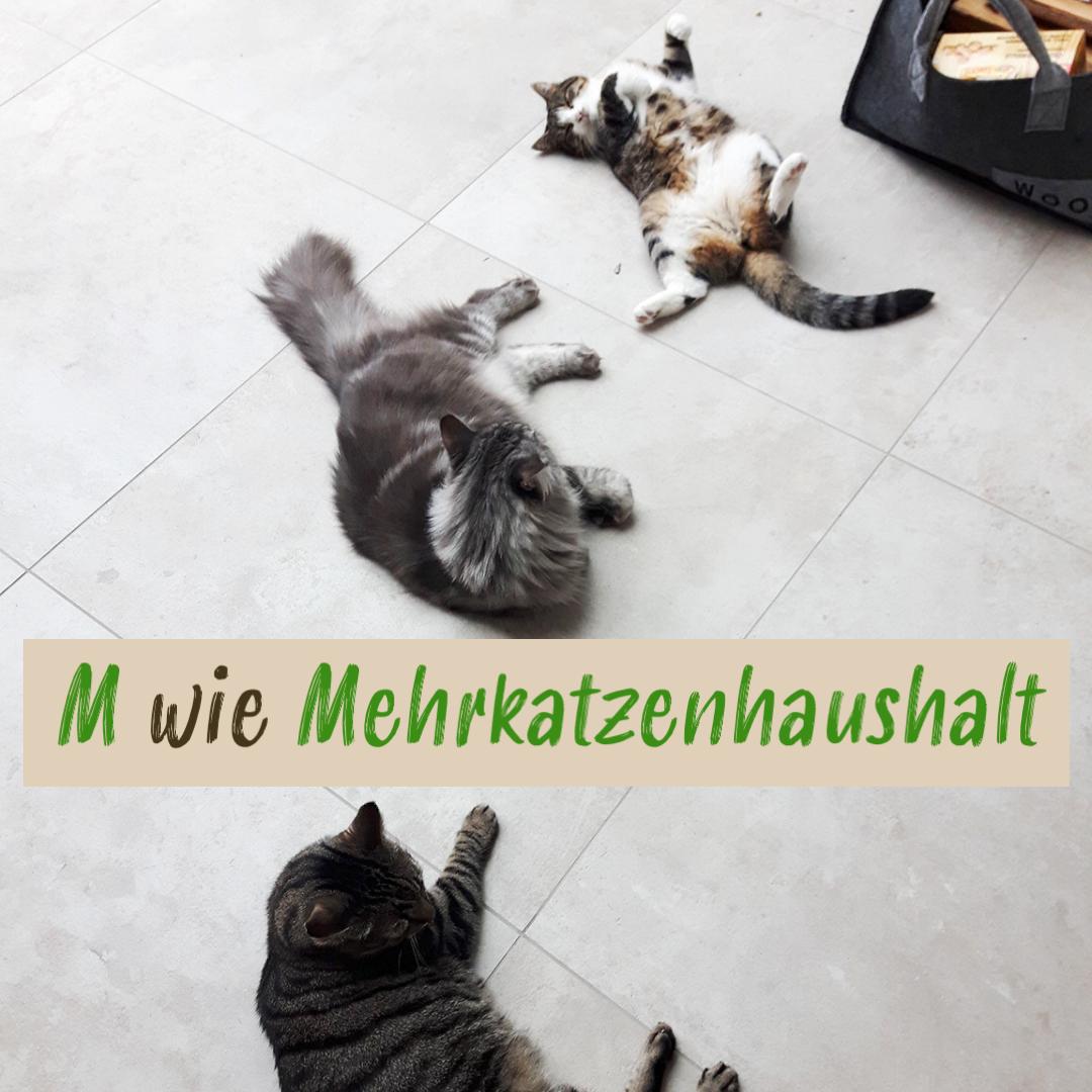 Xenias Katzen-ABC: M wie Mehrkatzenhaushalt