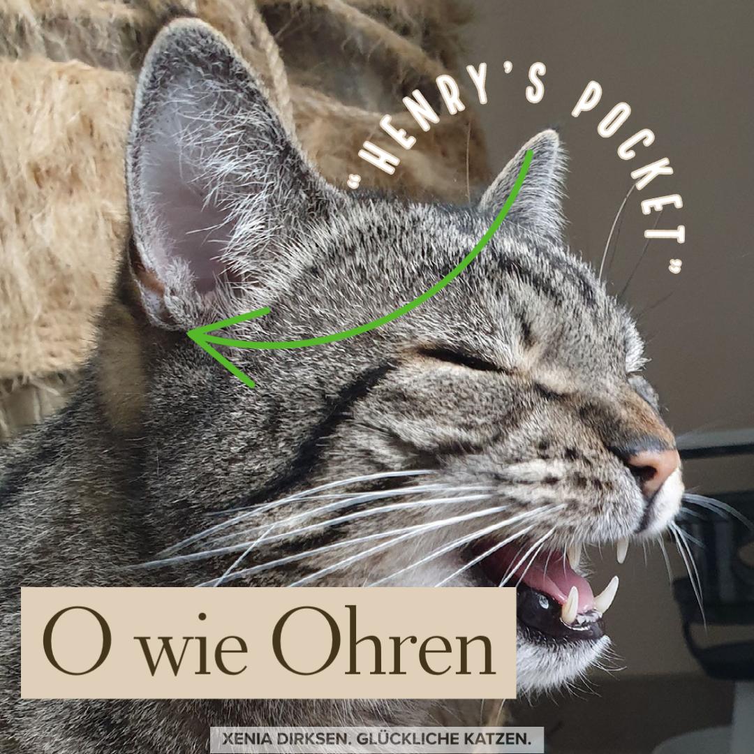Xenias Katzen-ABC: O wie Ohren