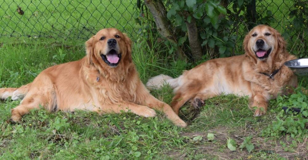 Jasper mit Amy