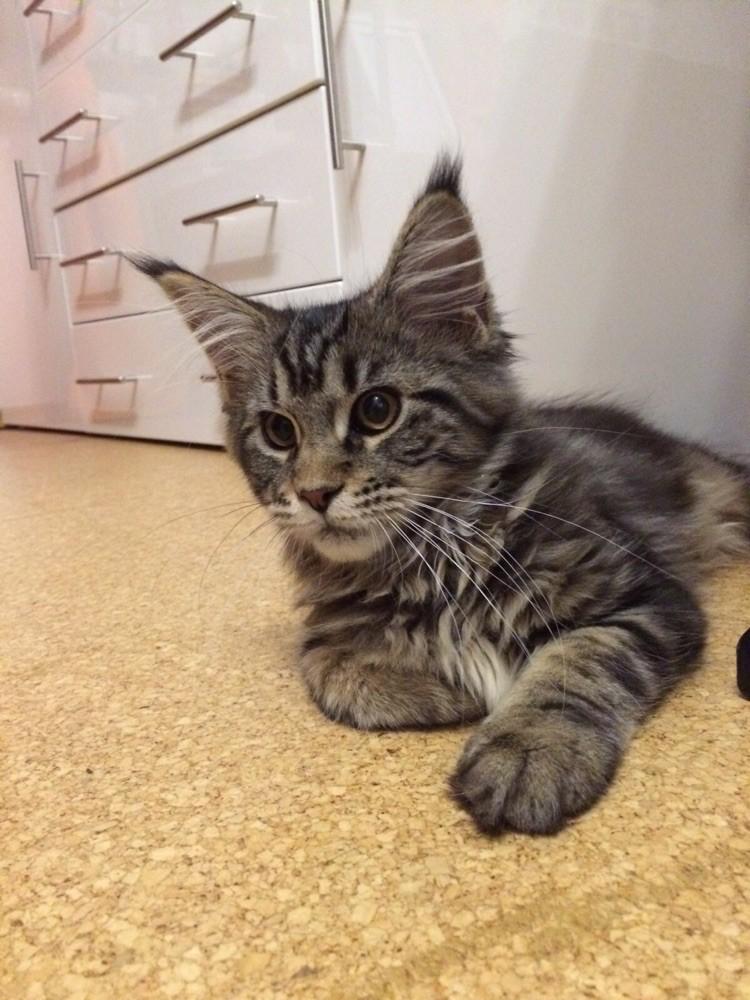 Lilly im neuen Zuhause